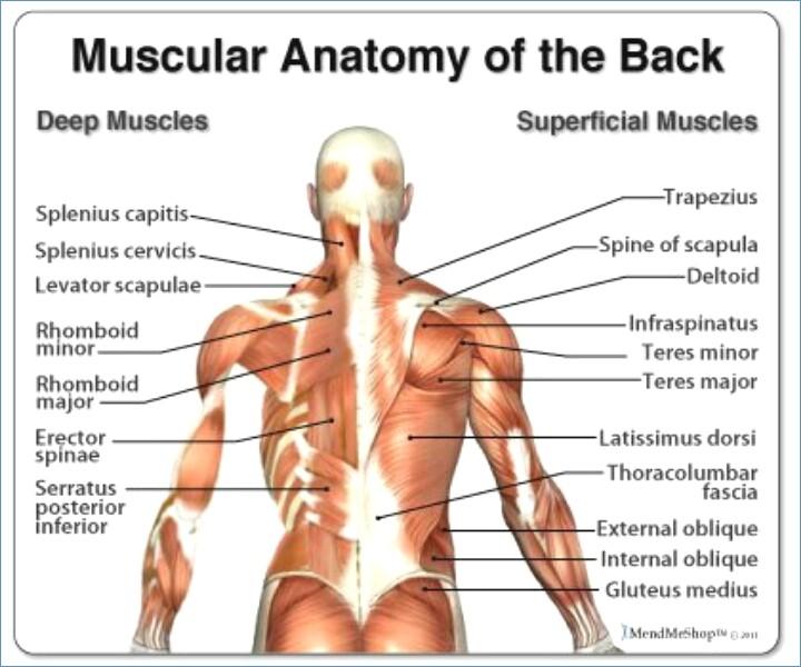 backache upper